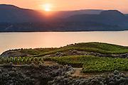 Sunset, Marichel Vineyards