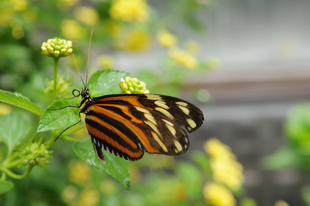 Butterflies at Brookside Gardens
