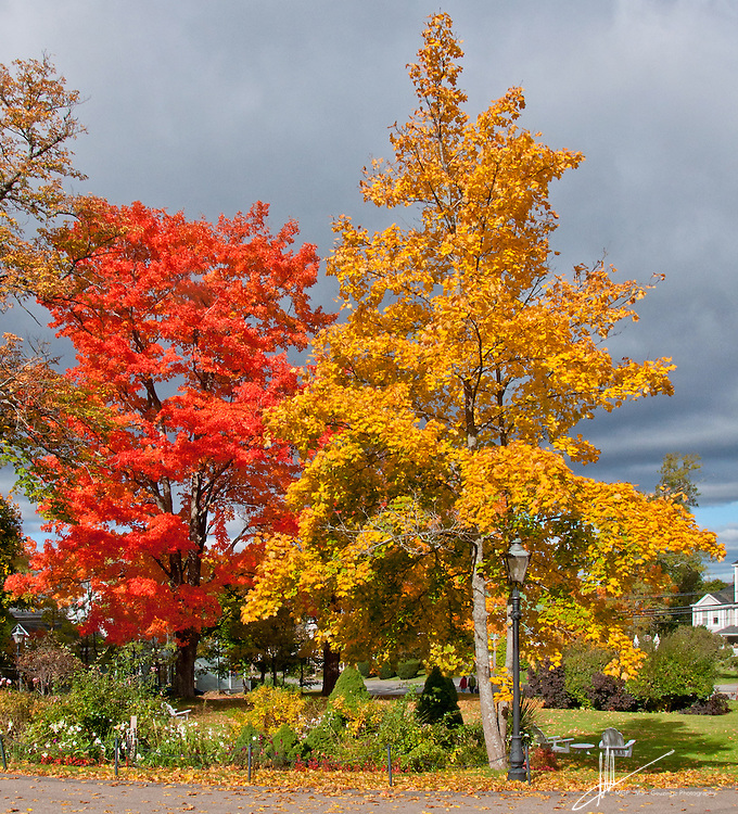 Two trees in front of the Blomidon Inn in Wolfville, Nova Scotia show off their autumn colors under a cloudy grey sky