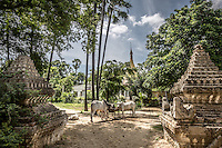 Cows lazily chomp away in the village of Mingun near Mandalay surrounded by temples and ruins.