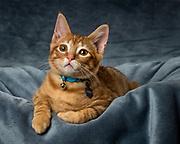 Portrait of kitten named Teddy in Morganton, North Carolina.<br /> <br /> &copy; Photography by Kathy Kmonicek
