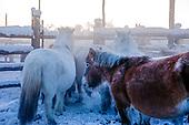 YAKUT_HORSE