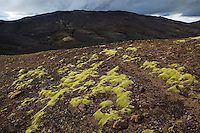 Mosi á Breiðbak, vestan við Langasjó. Moss on mount Breidbakur, west of lake Langisjor.