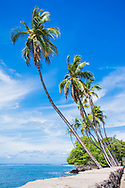 Palm trees grow out of the seawall in Hawaii