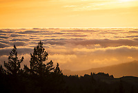 Foggy Sunset in Spring, Mount Tamalpais State Park, California