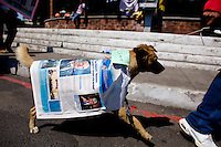 A dog named Spike is draped in a over sized newspaper with a picture  of the President as citizens take to the streets as a day of protest in connection with Guatemala's President Alvaro Colom fill the Central Plaza in Guatemala City May 17, 2009. . Thousands of protesters took to the streets of the capital  Sunday in two separated rival marches, one in support of the President and one denouncing President Alvaro Colom who was accused this week of murder, money laundering and having ties with narco-traffickers.(Darren Hauck)