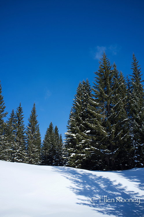 Fresh snow at the Alta Badia ski resort in the Dolomites, South Tyrol, Italy