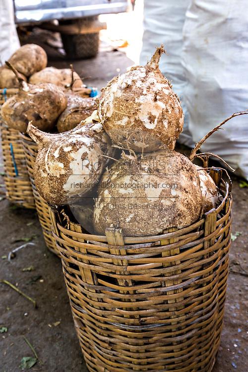 Fresh jicama root at Benito Juarez market in Oaxaca, Mexico.