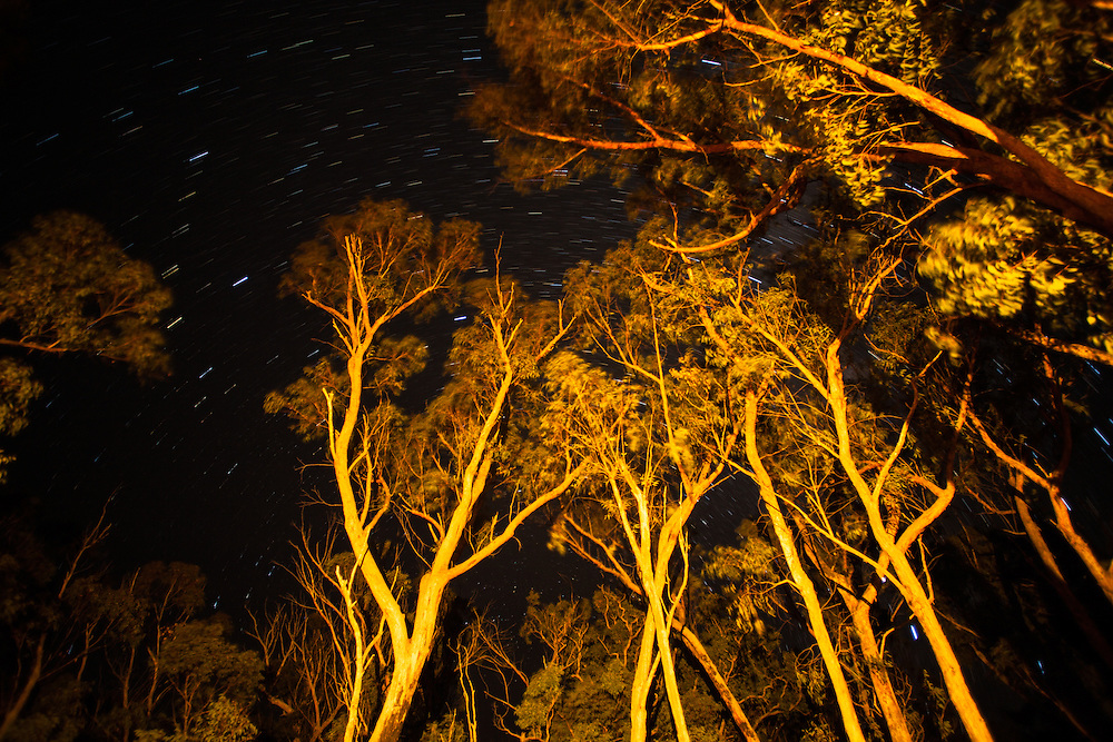 Trees illuminated by a campfire in Girraween National Park. The circular motion of star trails in the clear sky is captured in the background.