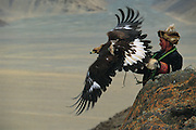 Golden Eagle being released by kazakh Hunter<br />Aquila chrysaetos<br />Western Mongolia