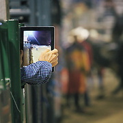 A cowboy captures an image of the bullriding finals with his iPad at the Jackson Hole Rodeo, Jackson, Wyoming.