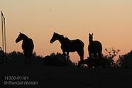11: MISCELLANY HORSE RESCUE FARM 1