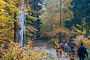 Wanderer, Herbst Wald bei Hinterhermsdorf, Sächsische Schweiz, Elbsandsteingebirge, Sachsen, Deutschland | walkers, autumn forest near Hinterhermsdorf, Saxon Switzerland, Saxony, Germany