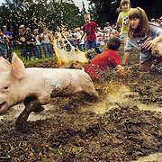 A group of girls and boys attempt to catch a greased pig during a greased pig competition Saturday, Sept. 2, 2006 in Dade City. Contestants from 2 years old to adults had to catch a greased pig in a mud pit setup at the festival. The winner of each age group got to keep the pig.