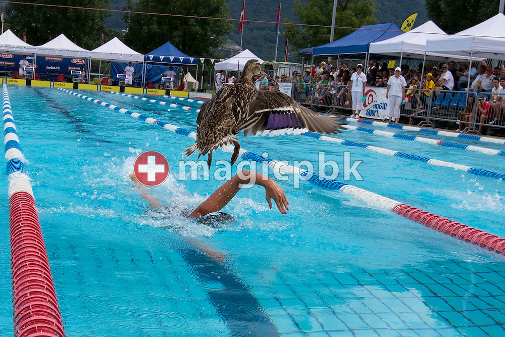 A mallard duck flies out of the swimming pool while BIEL's Cherelle OESTRINGER of Switzerland competes in the women's 400m Freestyle Final during the Swiss Swimming Summer Championships held at the 50m outdoor pool at the Centro sportivo nazionale della gioventu in Tenero, Switzerland, Saturday, July 5, 2014. (Photo by Patrick B. Kraemer / MAGICPBK)