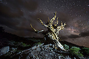 An ancient bristlecone pine tree stands under the stars in Schulman Grove in the White Mountains of California.