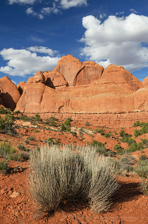 Sandstone fins, Arches National Park, Utah