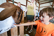 Willem Fuller, 4, delights in feeding a goat during the fourth annual International Student Farm Outing at the Schultz Family Farm in Cottage Grove, Wis., on June 24, 2012. Co-sponsored by the Schultz family and the University of Wisconsin-Madison International Student Services (ISS), the event introduced more than 100 UW-Madison international students and their families, and friends of the Schultz family to agricultural life in rural Wisconsin.
