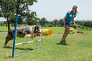 4-H Dawg Dayz at the Oklahoma County Cooperative Extension Office.<br /> dog demonstrations, rabies vaccinations and microchipping, making dog treats and toys and fun playing with great dog buddies.