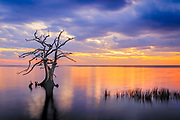 Long exposure of a lone cypress tree at sunset on the Currituck Sound, NC.