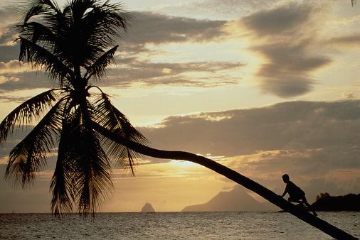 Boy on Palm Tree at Sunset