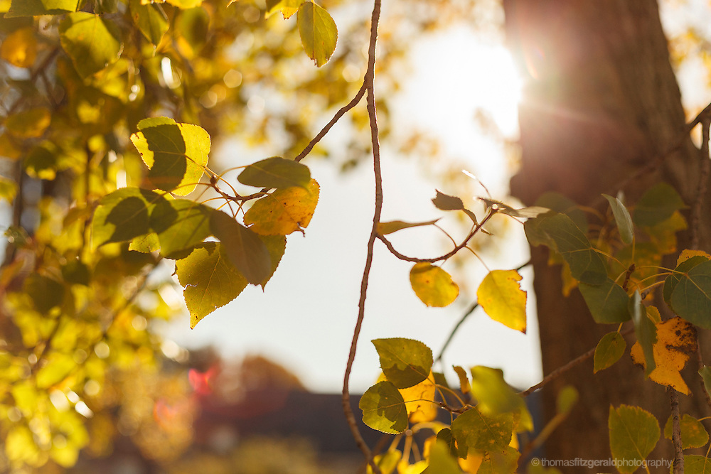 Autumn 2012, Dublin, Ireland: The warm Autumn sun streams through the leaves and branches of a tree covered in fall colours. The bright ball of the sunn is seen out of focus creating soime rich bokeh on the surrounding out of focus leaves