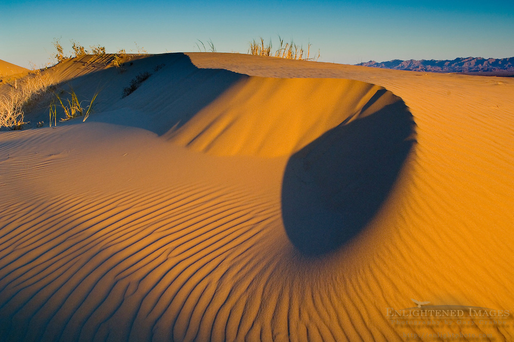 Wind blown patterns in sand dunes at sunrise, North Algodones Dunes Wilderness, Imperial County, California