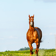 20160817 Martha Horse