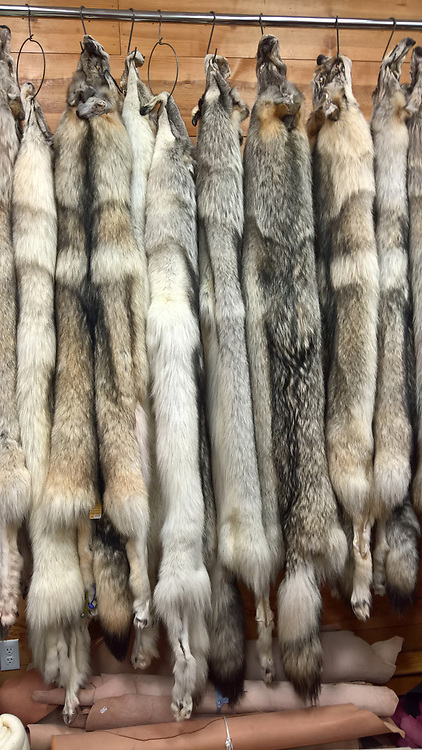 Alaska Raw Fur Copany in Fairbanks.  Not another shop like it anywhiere.