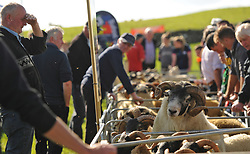 Pictured at the Mayo Breeding Sheep Event organised by Teagasc Mayo and the Lakeland Sheep producer group. The informative event took place on the farm of Sheep Farmer of the Year 2017 Joe Scahill, Westport.<br /> Pic Conor McKeown