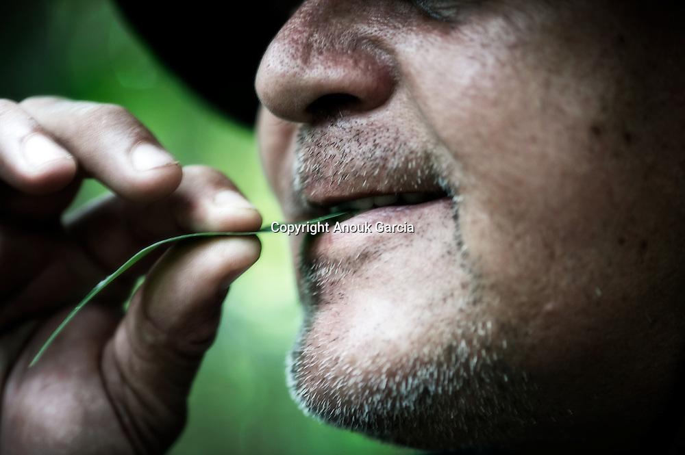 De la famille des poivrier la feuille de cette plante  permet de d&eacute;cupler son odorat. Bon pour la chasse et le chasseur. Activateur de sens.<br /> Enseignements de Nilson Mendes dans for&ecirc;t primaire du Seringal Cacohoeira