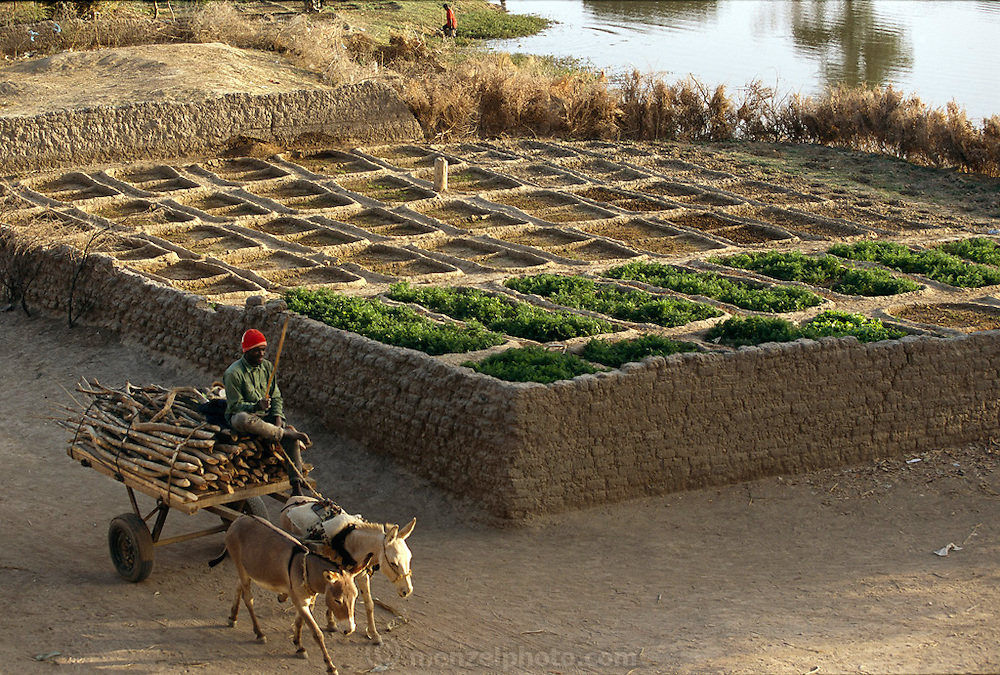 Vegetable gardens in Kouakourou, Mali irrigated with Niger River water. (Supporting image from the project Hungry Planet: What the World Eats.)