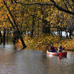 Canoeing on the Mill River in fall in Northampton, Massachusetts.  Massachusetts Audubon Society's Arcadia Wildlife Sanctuary.  Silver maples.