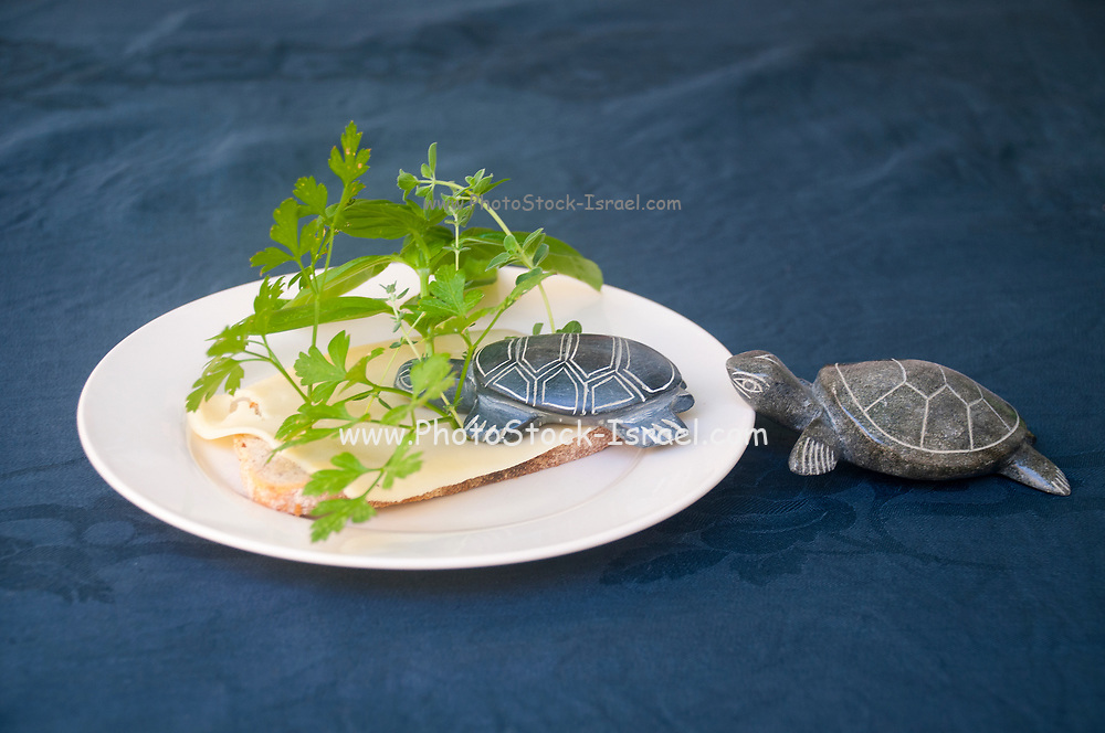 Adding fibers to food as food for tortoises, humouristic approach