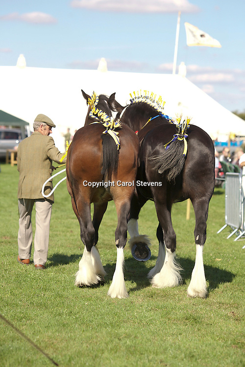 David Cosgrove<br /> Pairs Class<br /> Left - 2 year old<br /> Right  - Hinton Tiara (1st 3 year old Class)