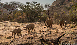 Orphaned baby elephants of the Reteti Elephant Sanctuary (@r.e.s.c.u.e) spent most of their day in the wild, learning to BE wild. They spend every day from 6am to 6pm in the wildness learning to graze, browse and be a part of the wild so that when it&rsquo;s time to re-introduce them, they will be prepared. <br /> <br /> Reteti Elephant Sanctuary, in northern Kenya is the first ever community-owned and run elephant sanctuary in Africa. The sanctuary provides a safe place for injured elephants to heal and later, be returned back to the wild.  You can support this incredible place and the people who protect wildlife. Make a $10 contribution in support of Reteti for a chance to win a trip to Kenya, see Dave Matthews in concert and take home Dave's guitar with @prizeo (Link in profile). Not only will you be helping care for orphaned baby elephants and strengthening community ties, you&rsquo;ll also have a chance to win a life-changing trip to see the sanctuary in person. The first $10,000 in funds raised will be generously matched by Elephant Gems (@elephantgems).<br /> <br /> Reteti operates in partnership with Conservation International (@conservationorg) who provide critical operational support and work to scale the Reteti community-centered model to create lasting impacts worldwide. <br /> <br /> Photo by @amivitale.