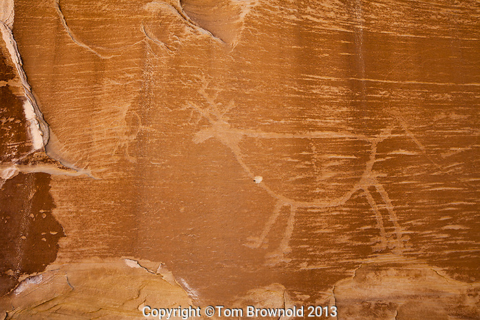 Petroglyph panel in the Navajo Sandstone