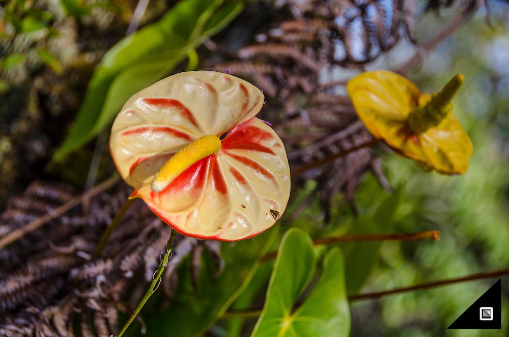 USA - Hawaii Big Island