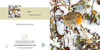 Robin Erithacus rubecula in snow Square Greeting Card with Peel and Seal White Envelope