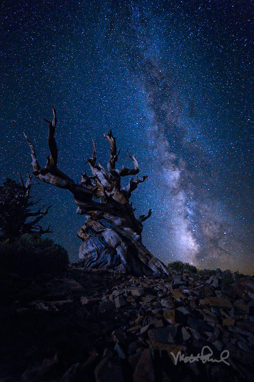 The Bristlecone Pine Forest is home to some of the oldest living trees in the world. That weekend I wanted to shoot the Bristlecone Pines along with the Milky Way.  So I headed to the White Mountains, well above 10,000 ft. elevation where the ancient bristlecone pine forest is located. It's hard to fathom how old these trees are, but based on their tree rings somewhere between 4,000 and 5,000 years old. Put that into context this tree was a little seedling when the pyramids in Egypt were being built. <br />