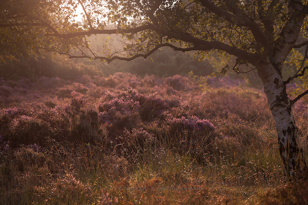Dunwich Heath just after sunrise again