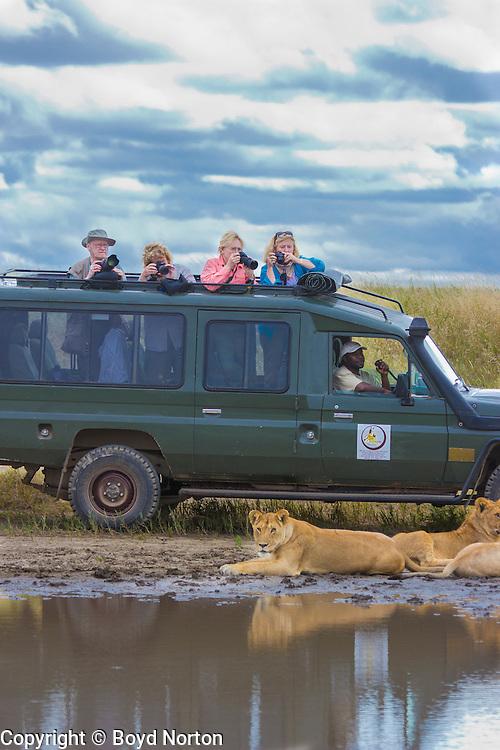 Safari visitors photograph lions at close range