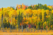 Mixedwood forest in autumn<br />Worthington<br />Ontario<br />Canada