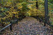 Autumn colors at the New York Botanical Garden