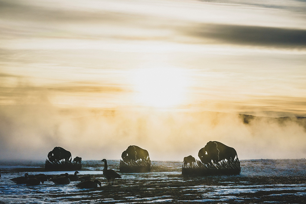 Bison silhouettes at the Smoking Water Park, Hot Springs State Park, Thermopolis, Wyoming.