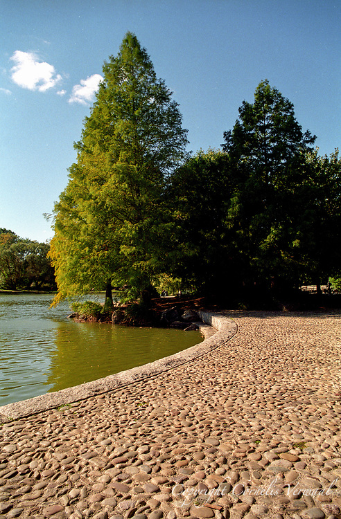 Cobble stones and Bald Cypress trees at the Harlem Meer in Central Park