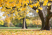 Autumn leaves hanging on tree branch in park