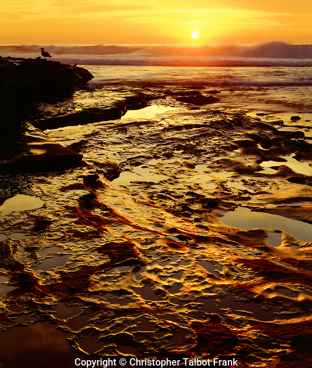 I set up my 4x5 view camera to get a detailed photo of this special La Jolla tide pools sunset.  The ball of fire sun setting above waves and glowing sandstone rock make for a inspirational high resolution image