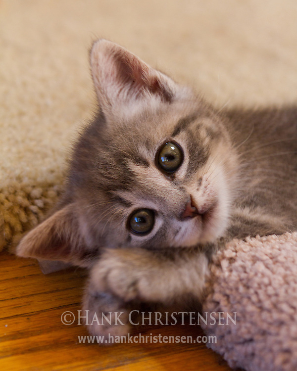 Gem lies on the floor, looking cute