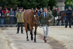Griffiths Sam, (AUS), Paulank Brockagh<br /> First Horse Inspection - Mitsubishi Motors Badminton Horse Trials <br /> Badminton 2015